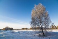 Paisaje del invierno con el abedul nevado Imágenes de archivo libres de regalías