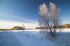 Paisaje del invierno con el abedul nevado Fotos de archivo libres de regalías
