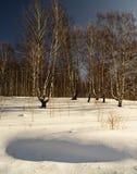 Paisaje del invierno con el abedul por la arboleda Foto de archivo
