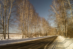 Paisaje del invierno con el abedul por la arboleda Imágenes de archivo libres de regalías