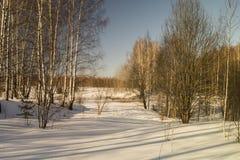 Paisaje del invierno con el abedul por la arboleda Fotografía de archivo