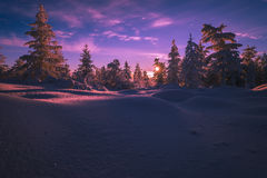 Paisaje del invierno con el bosque, cielo nublado y sol y halo Imagenes de archivo