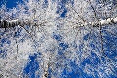Paisaje del invierno con el bosque cubierto con nieve Fotografía de archivo libre de regalías