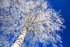 Paisaje del invierno con el bosque cubierto con nieve Imagenes de archivo
