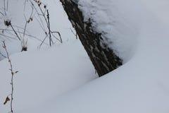 Paisaje del invierno con el bosque 30012 del abedul blanco Foto de archivo