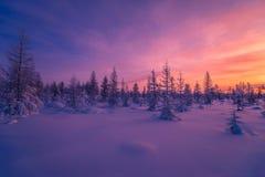 Paisaje del invierno con el bosque, el cielo nublado y el sol Imagen de archivo