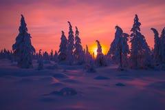 Paisaje del invierno con el bosque, el cielo nublado y el sol Foto de archivo libre de regalías