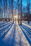 Paisaje del invierno con el bosque en la puesta del sol Imágenes de archivo libres de regalías