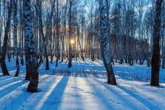 Paisaje del invierno con el bosque en la puesta del sol Fotos de archivo