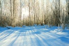 Paisaje del invierno con el bosque y el sol brillo de la sol a través del tre Foto de archivo libre de regalías