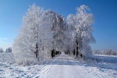 Paisaje del invierno con el cielo azul Imágenes de archivo libres de regalías