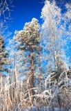Paisaje del invierno con el cielo de madera y azul Fotos de archivo libres de regalías