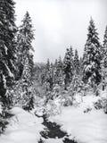 Paisaje del invierno con el río y los árboles de pino nevados en bosque fotografía de archivo