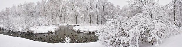 Paisaje del invierno con el río y los patos en parque Fotografía de archivo