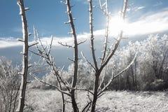 Paisaje del invierno con el sol que brilla a través de ramas hielo-cubiertas Fotografía de archivo libre de regalías