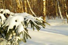 Paisaje del invierno con la rama del abeto imágenes de archivo libres de regalías