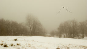 Paisaje del invierno con las aves migratorias Fotografía de archivo libre de regalías