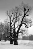 Paisaje del invierno con los árboles fotos de archivo libres de regalías