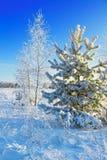 Paisaje del invierno con los árboles Fotografía de archivo libre de regalías