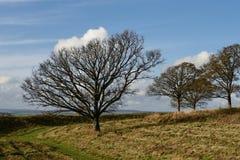 Paisaje del invierno con los árboles Foto de archivo libre de regalías