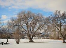 Paisaje del invierno con los árboles altos en parque Fotos de archivo libres de regalías