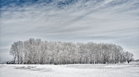 Paisaje del invierno con los árboles cubiertos con helada Fotos de archivo