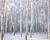 Paisaje del invierno con los árboles de abedul nevosos Imagenes de archivo