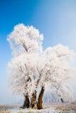 Paisaje del invierno con los árboles helados Fotos de archivo
