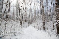 Paisaje del invierno con los árboles nevados Fotografía de archivo libre de regalías