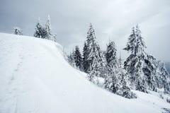 Paisaje del invierno con los árboles nevosos fotografía de archivo