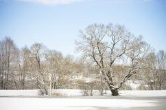 Paisaje del invierno con los árboles y el cielo azul Imagen de archivo libre de regalías