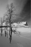 Paisaje del invierno con los árboles y las montañas Fotografía de archivo libre de regalías