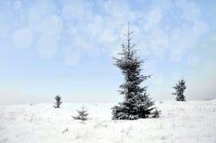 Paisaje del invierno con los árboles y los copos de nieve nevosos Fotos de archivo