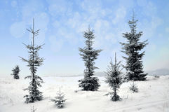 Paisaje del invierno con los árboles y los copos de nieve nevosos Imagen de archivo