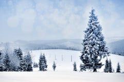 Paisaje del invierno con los árboles y los copos de nieve nevosos Fotografía de archivo libre de regalías
