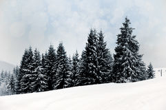 Paisaje del invierno con los árboles y los copos de nieve nevosos Fotografía de archivo