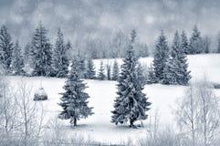 Paisaje del invierno con los árboles y los copos de nieve nevosos Fotos de archivo libres de regalías