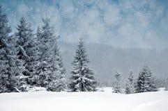 Paisaje del invierno con los árboles y los copos de nieve nevosos Imagen de archivo libre de regalías