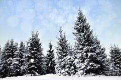 Paisaje del invierno con los árboles y los copos de nieve nevosos Foto de archivo libre de regalías