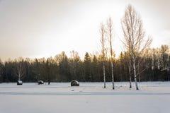Paisaje del invierno con los abedules y los pajares Foto de archivo libre de regalías