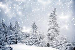 Paisaje del invierno con los abetos nevosos Foto de archivo