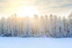 Paisaje del invierno con los abetos verdes cubiertos con nieve y wint Fotos de archivo libres de regalías