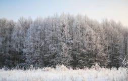 Paisaje del invierno con los abetos verdes cubiertos con nieve y wint Imagen de archivo