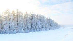 Paisaje del invierno con los abetos verdes cubiertos con nieve y wint Foto de archivo libre de regalías