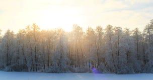 Paisaje del invierno con los abetos verdes cubiertos con nieve y wint Fotos de archivo