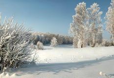 Paisaje del invierno con los arbustos, los abedules y el bosque nevoso en el día Fotografía de archivo