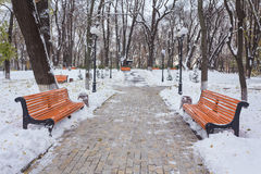 Paisaje del invierno con los bancos en el callejón del parque Foto de archivo libre de regalías