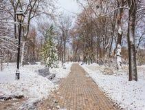 Paisaje del invierno con los bancos en el callejón del parque Imagenes de archivo