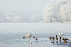 Paisaje del invierno con los pájaros Imagen de archivo libre de regalías