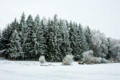Paisaje del invierno con nieve y árboles Fotos de archivo libres de regalías
